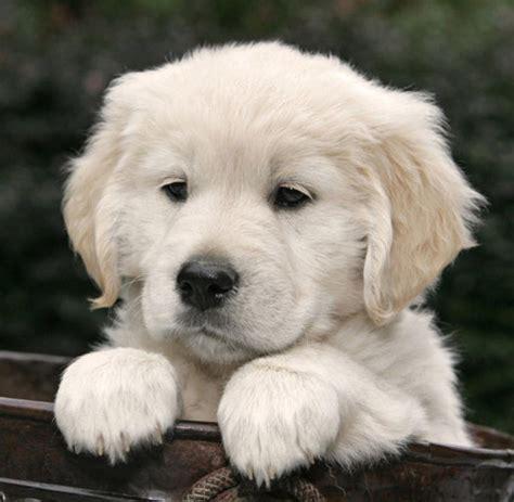 Hunde auf Anfrage erlaubt